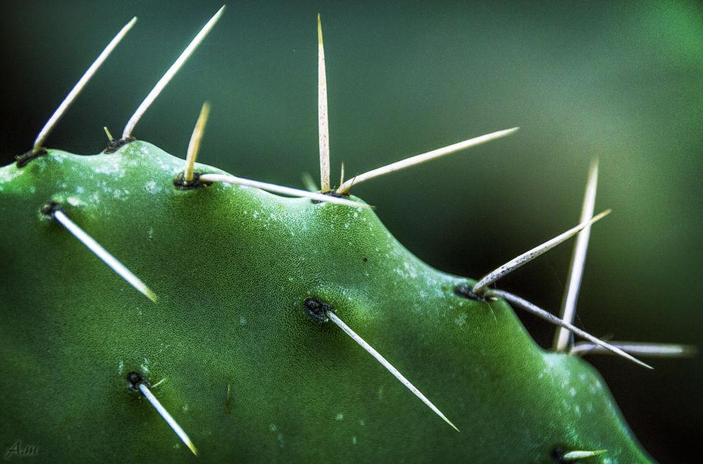 Cactus Life by amit matzliach