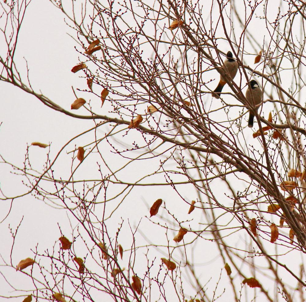 The last  leaves  fall by mehdi vatan parast