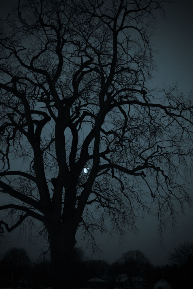 Photo in Random #tree #moon
