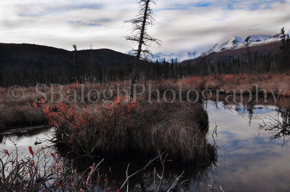 Alaska by karoly710