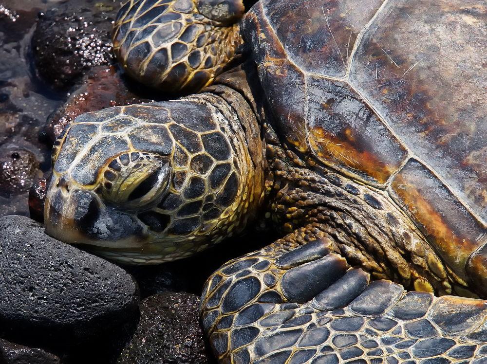 Turtle resting by bkleemann