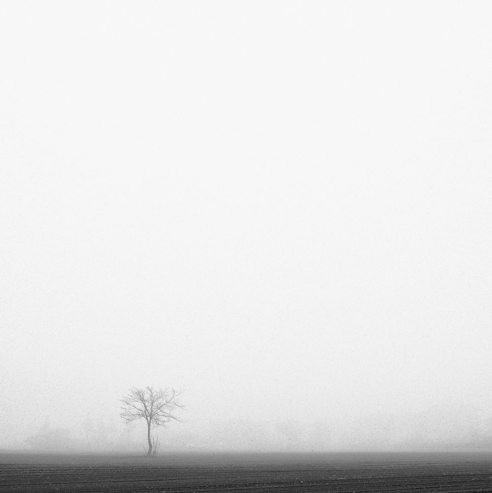 Only fog by Windfr1