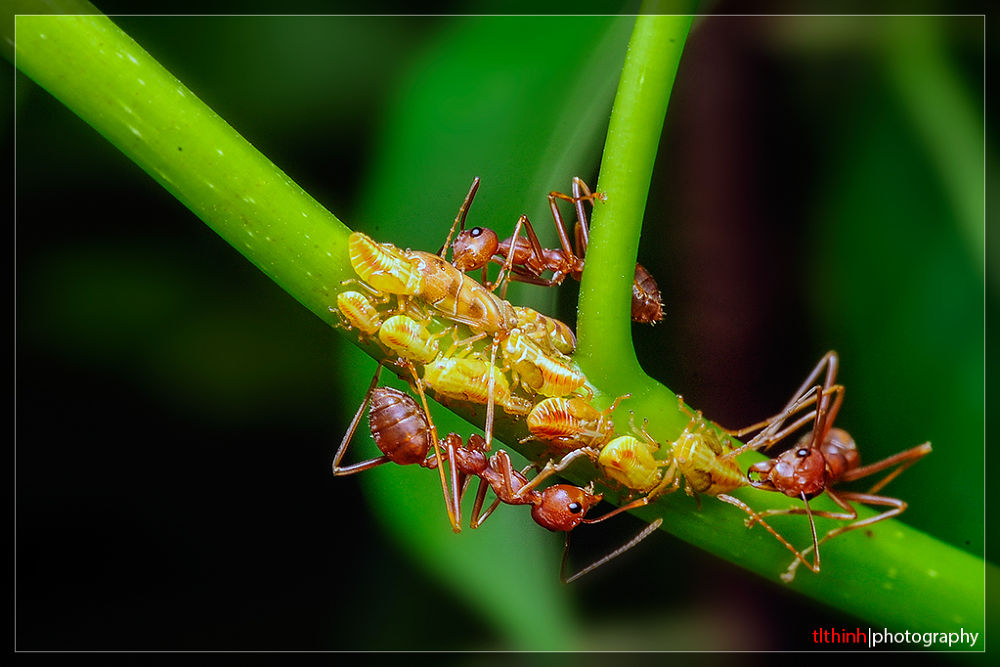 ants by tlthinh.macros