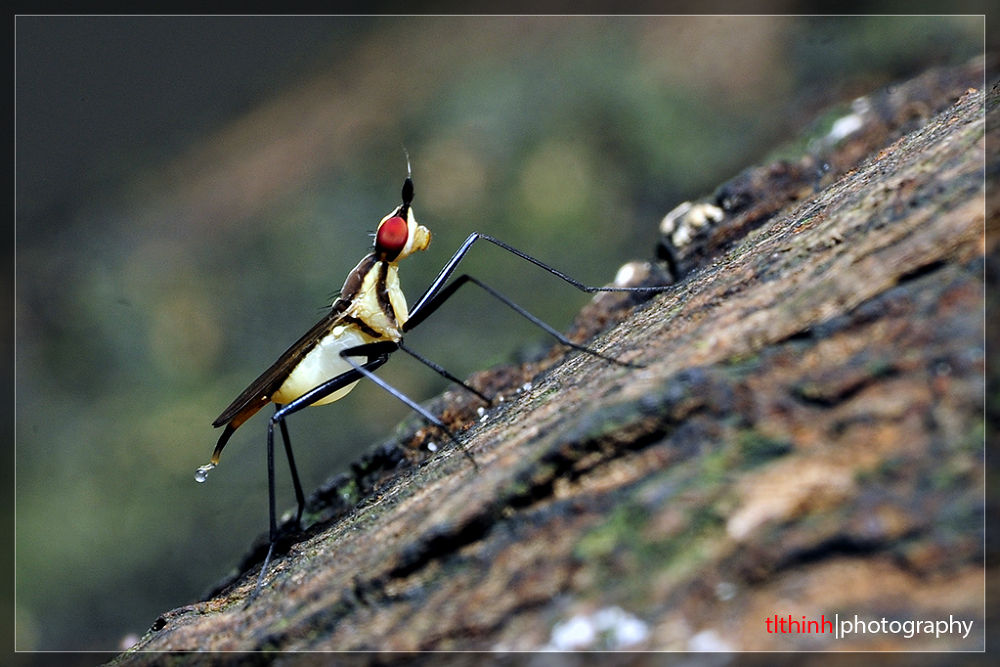 mosquito by tlthinh.macros