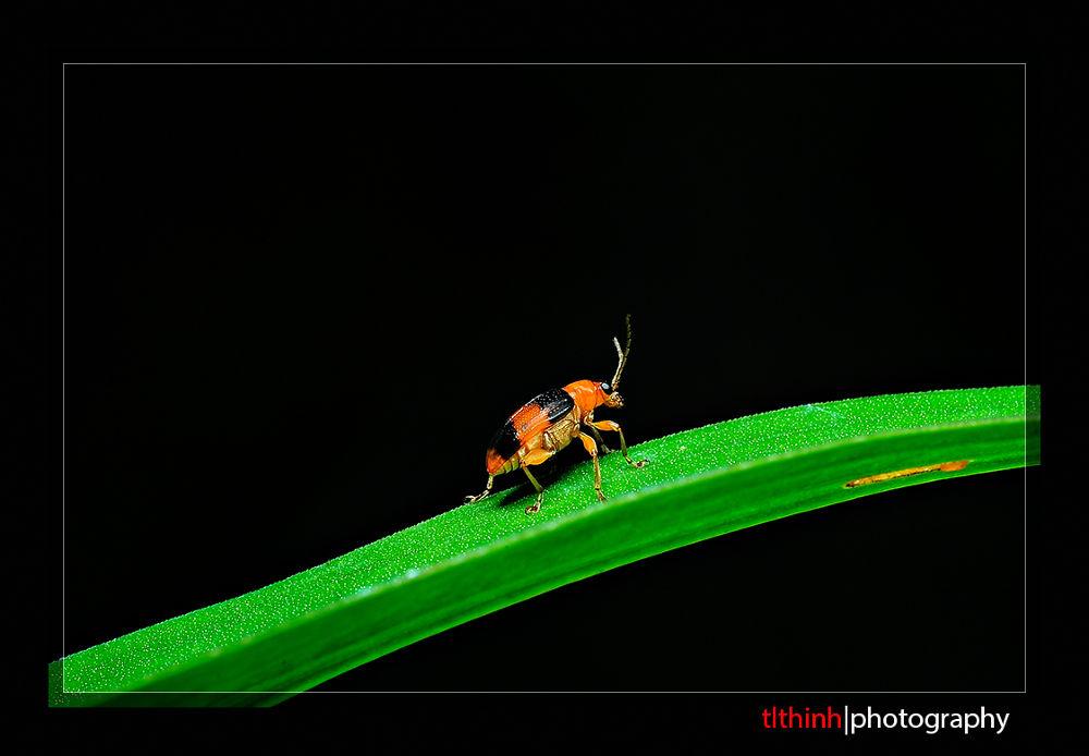 bug by tlthinh.macros