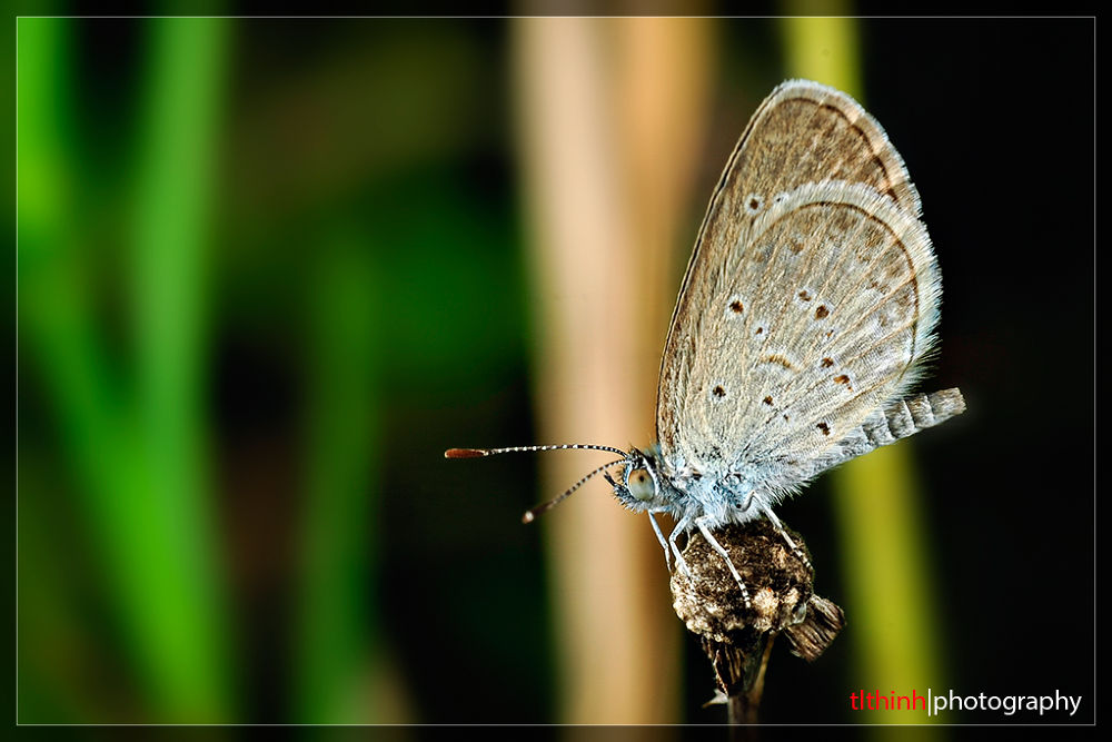 butterfly by tlthinh.macros