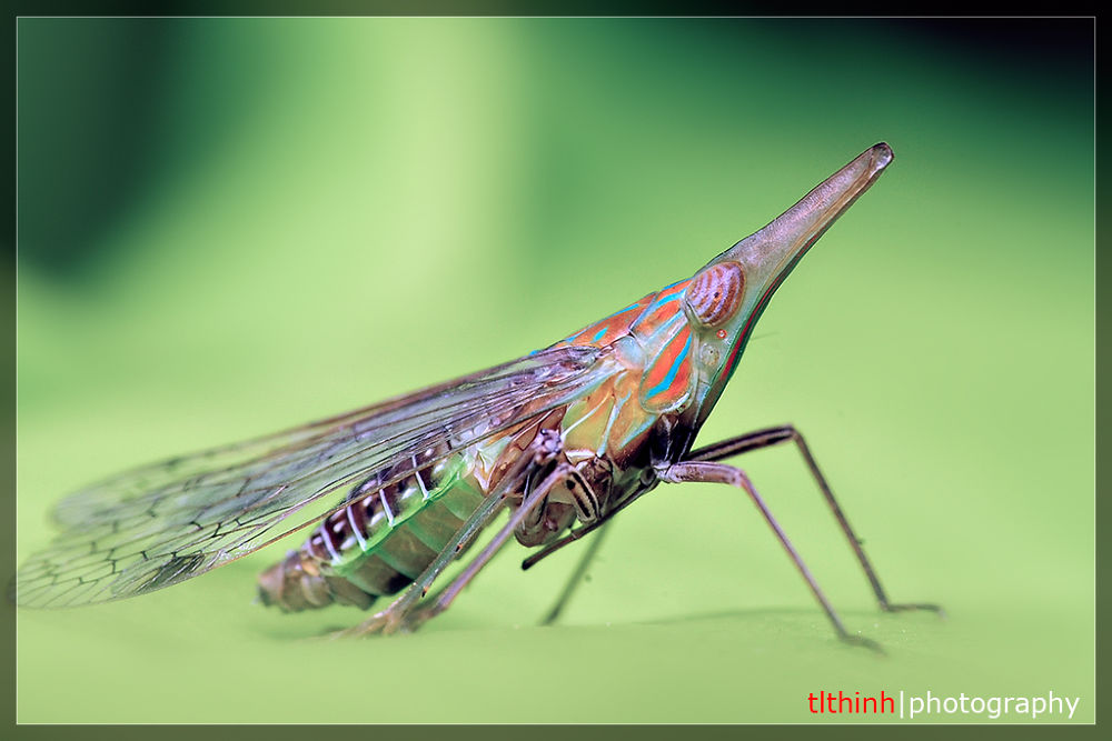 bug by tlthinh.macros