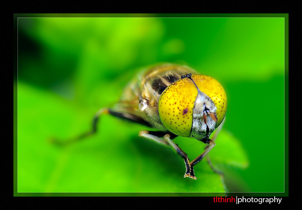 Fly by tlthinh.macros