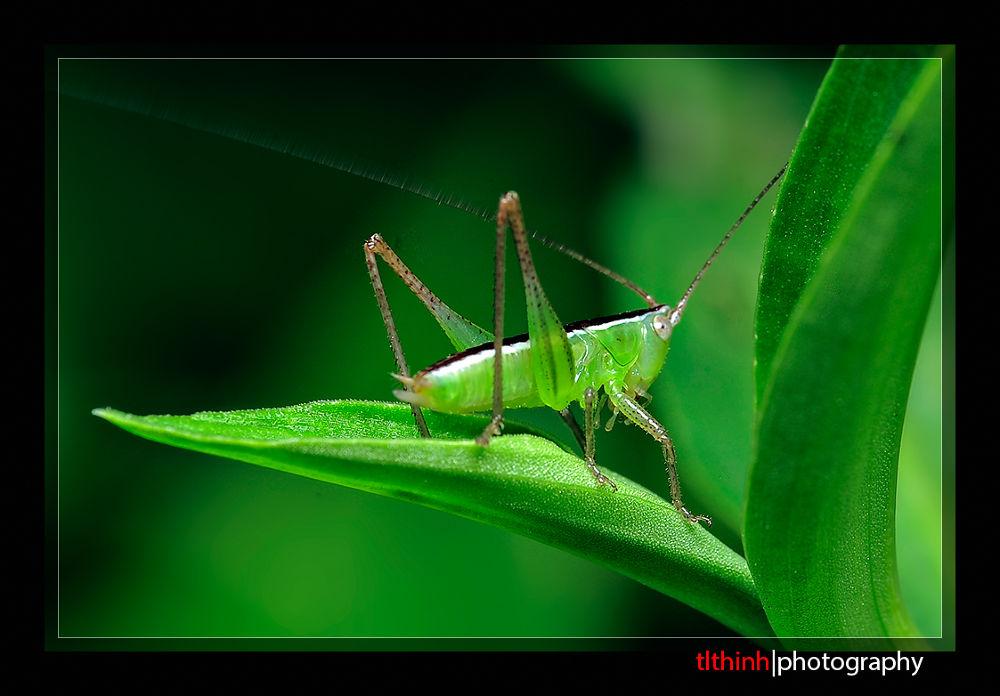 grasshopper by tlthinh.macros