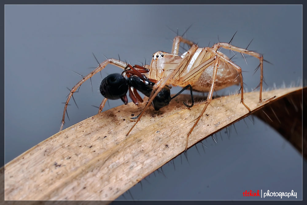 spider by tlthinh.macros