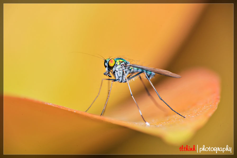 3 by tlthinh.macros