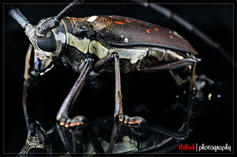 5 by tlthinh.macros