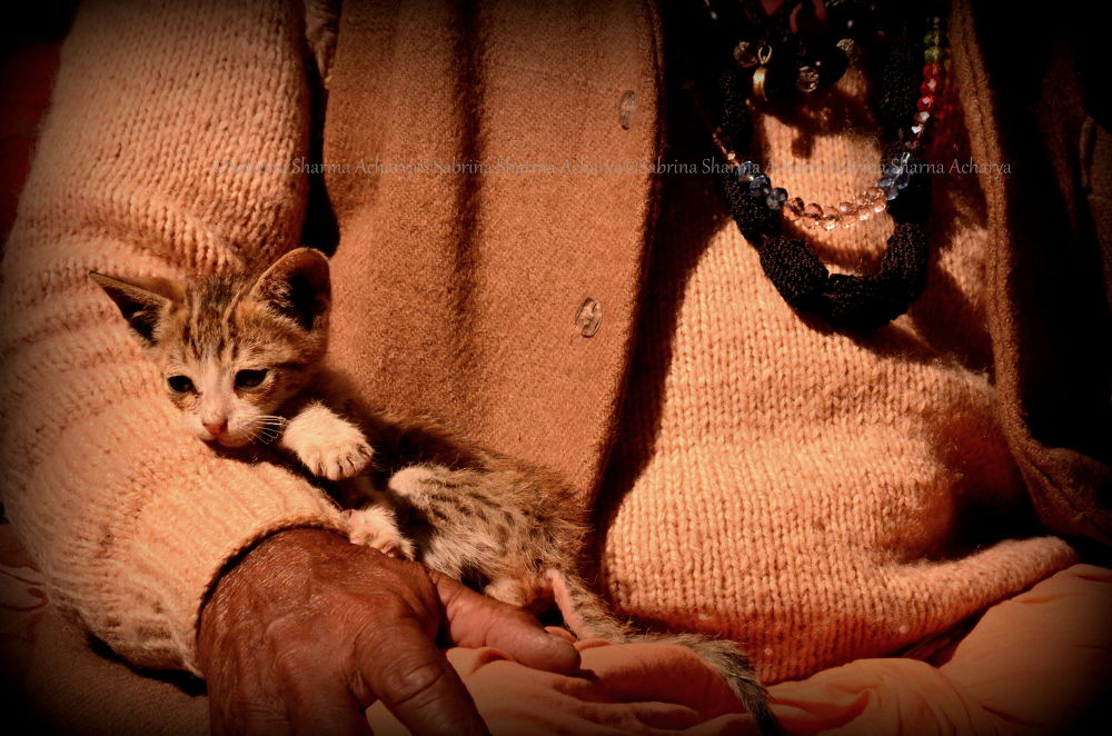 A Kitty who found home in the lap of a Seer. by Sabrina Sharma Acharya