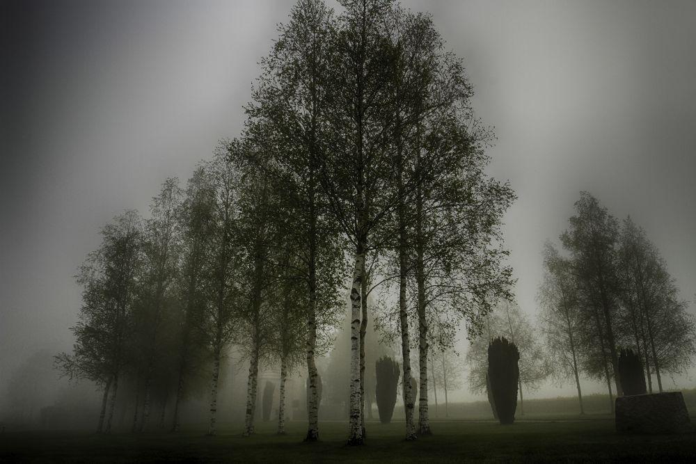 Silver Birch in the Mist (Ulster Memorial) by davidbatchelor94