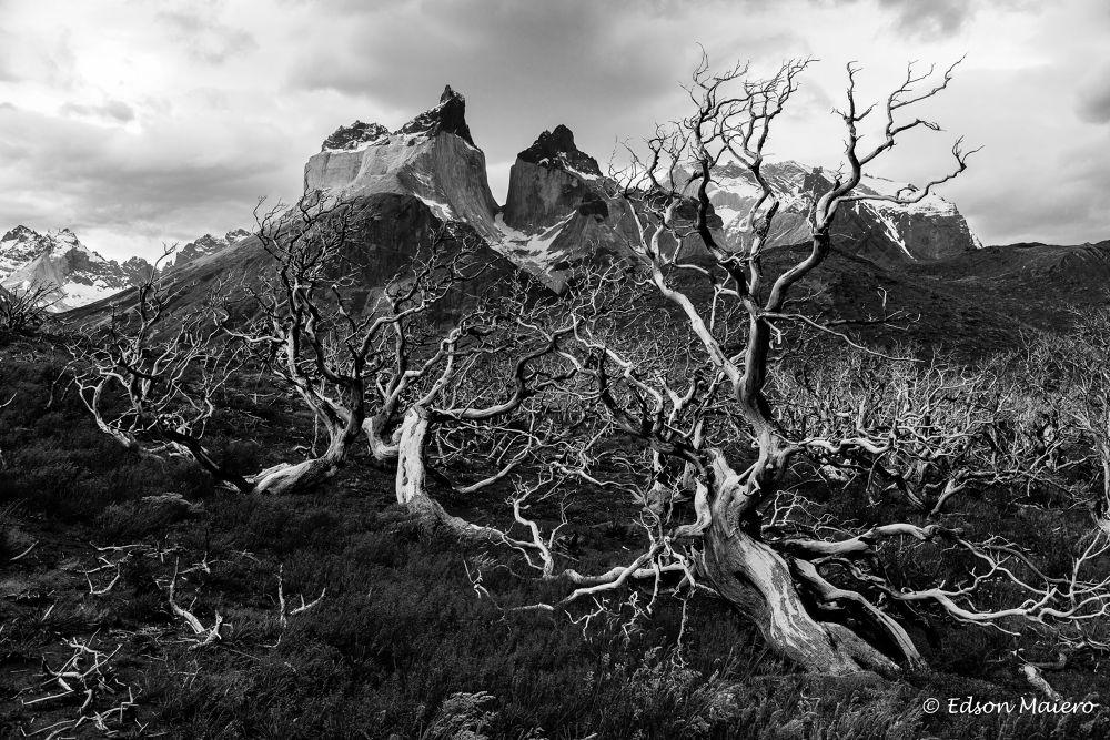 Torres del Paine - Los tres Cuernos by emaiero