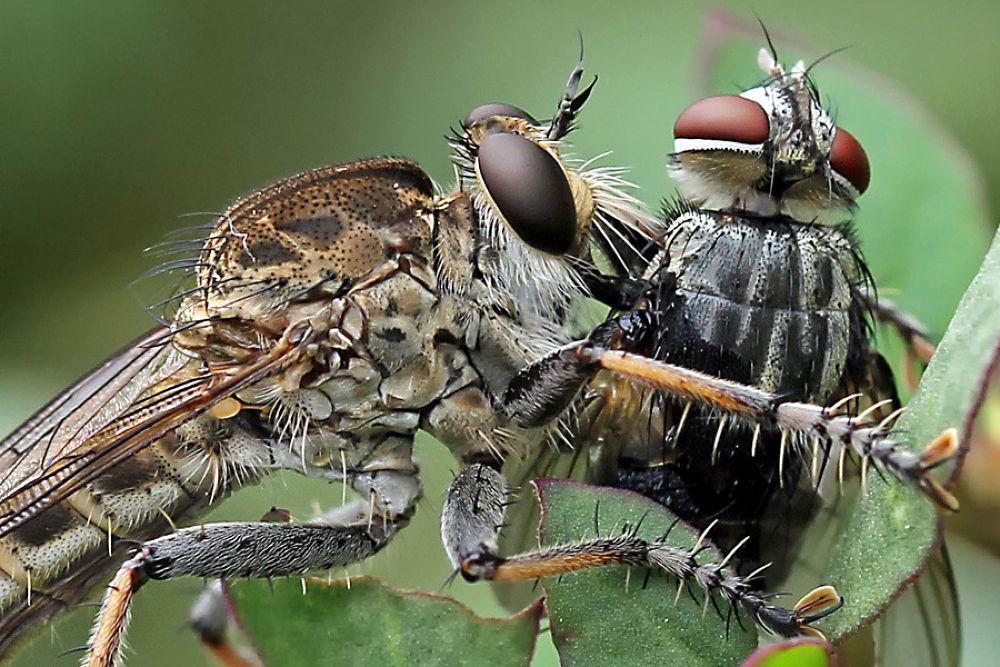 big prey by ddarmawan