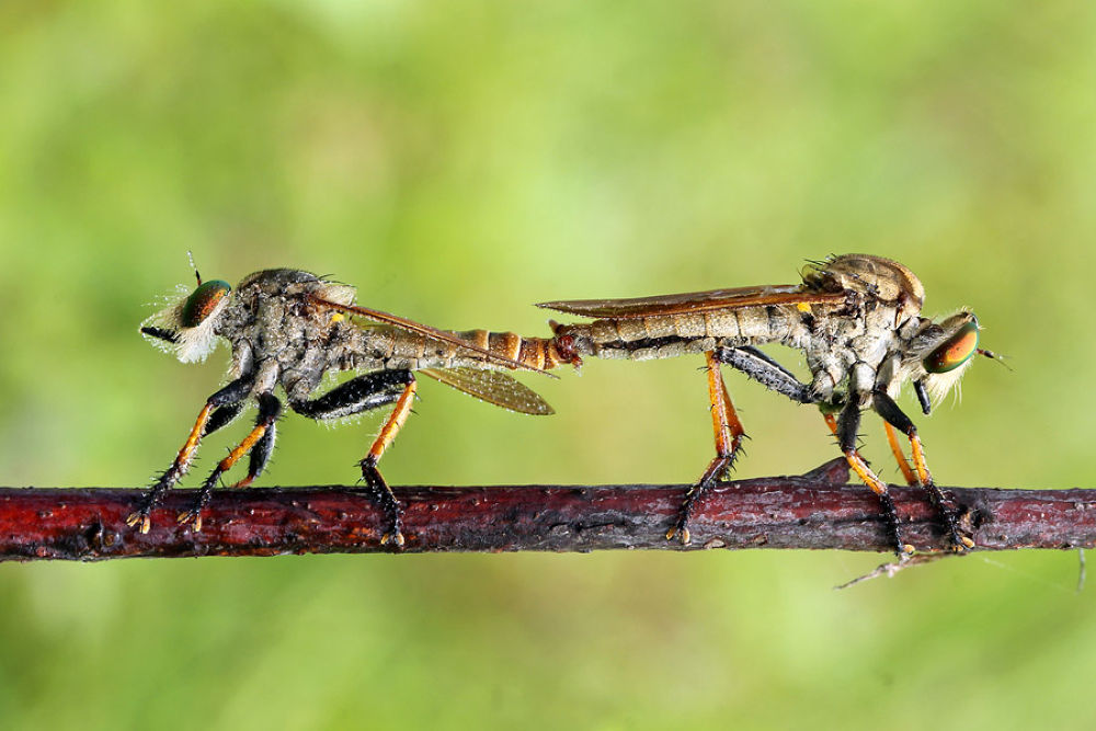 Photo in Macro #macro #mating