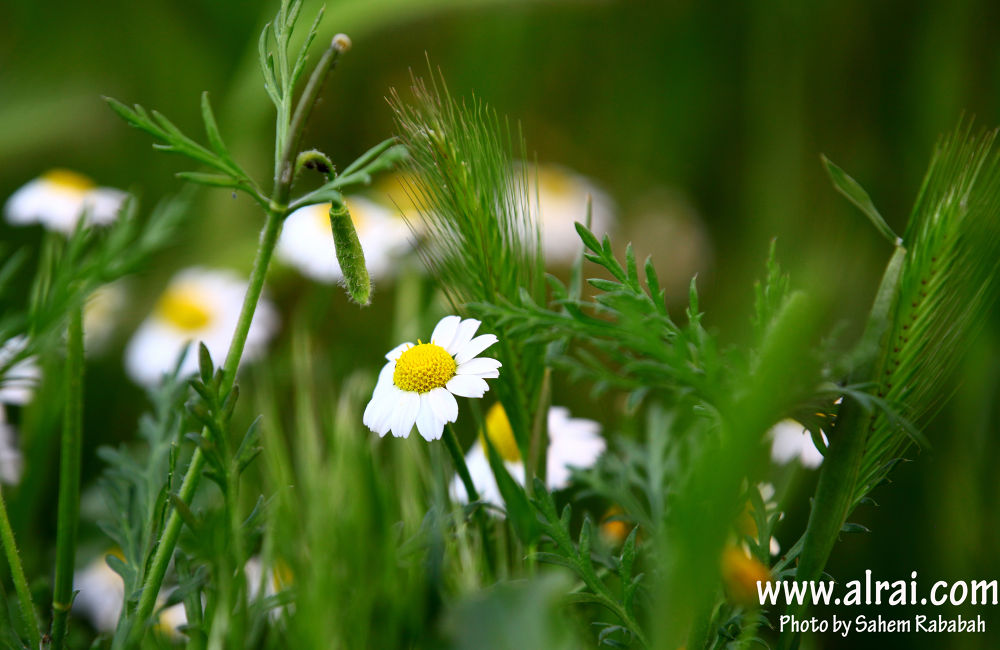 Spring - Jordan by Sahe
