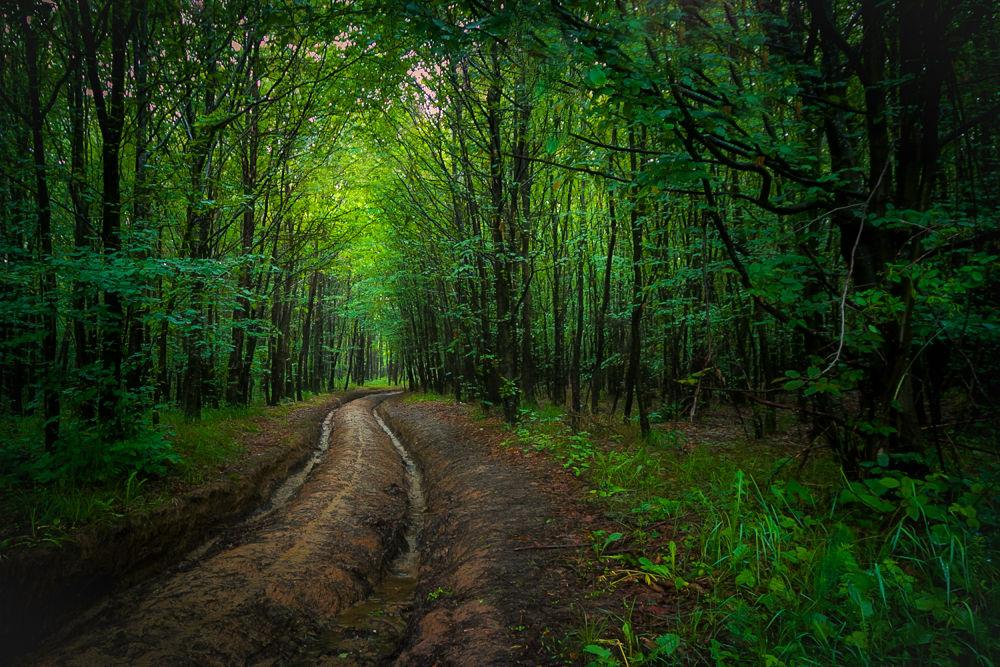 deeeep forest by Volker Vornehm