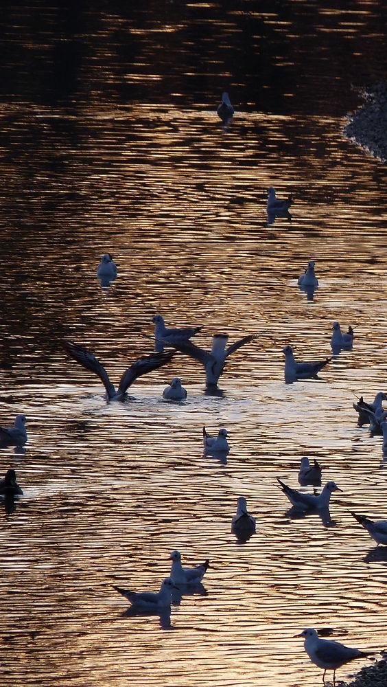 Ptice by Feniks