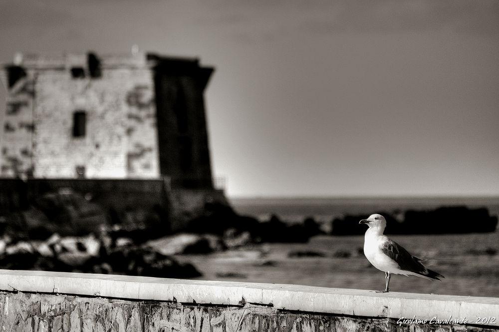 seagull upon walls by GiroPhoto - Girolamo Cavalcante