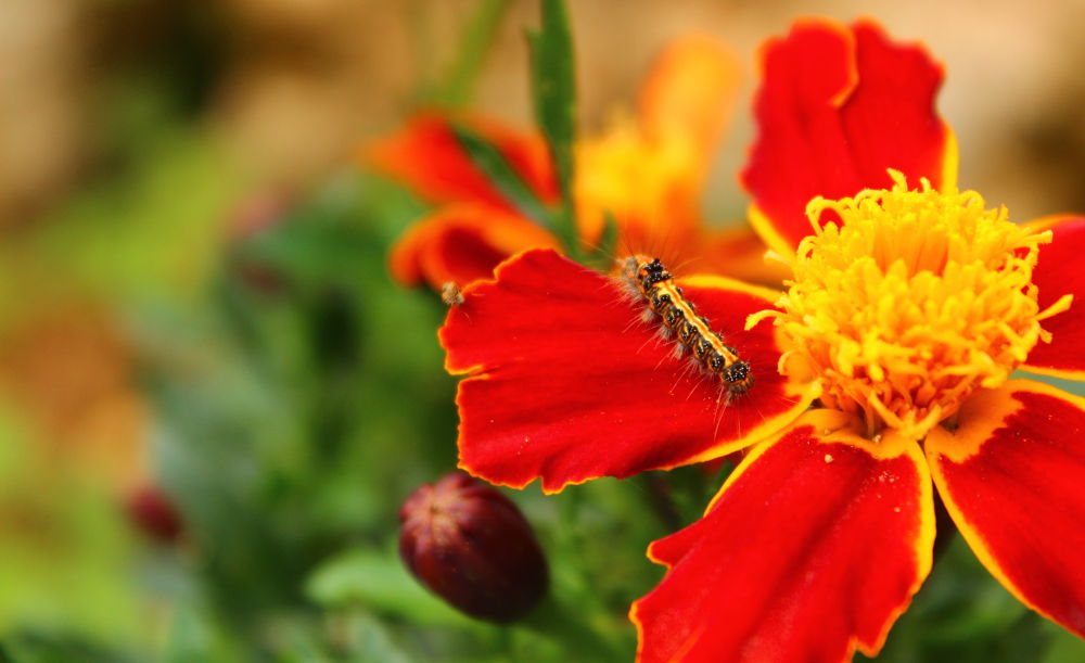 Photo in Nature #caterpillar
