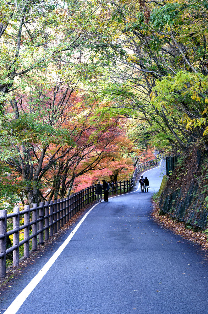 Autumn Road.. by snehasisbasu
