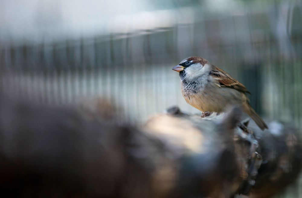 Bird 3... by cag_a_tay
