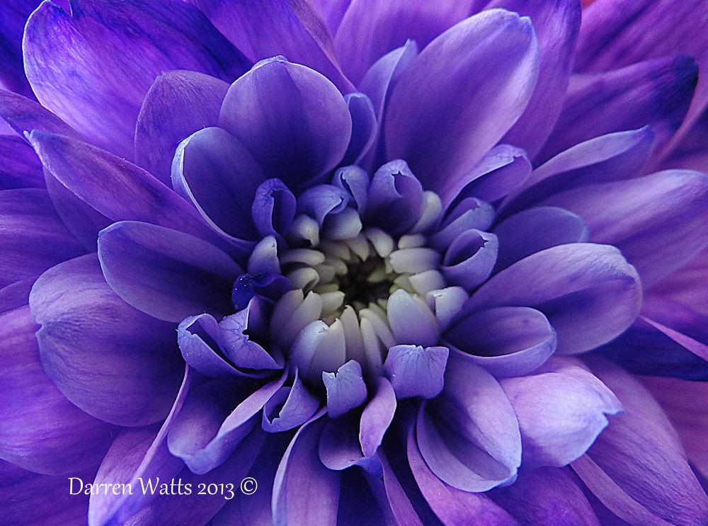 Flower Power by Darren Watts Photography
