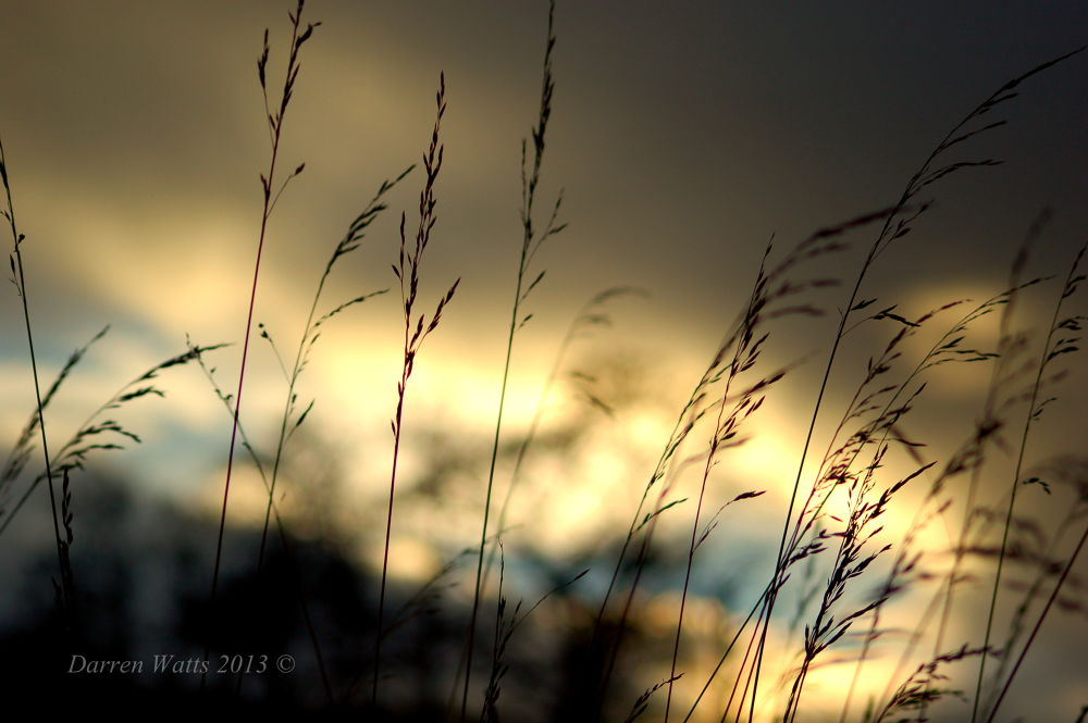 Blowing in the wind by Darren Watts Photography