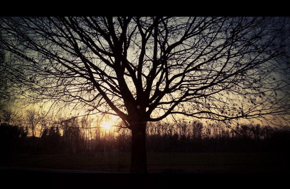 the big tree by Dario D'isanto