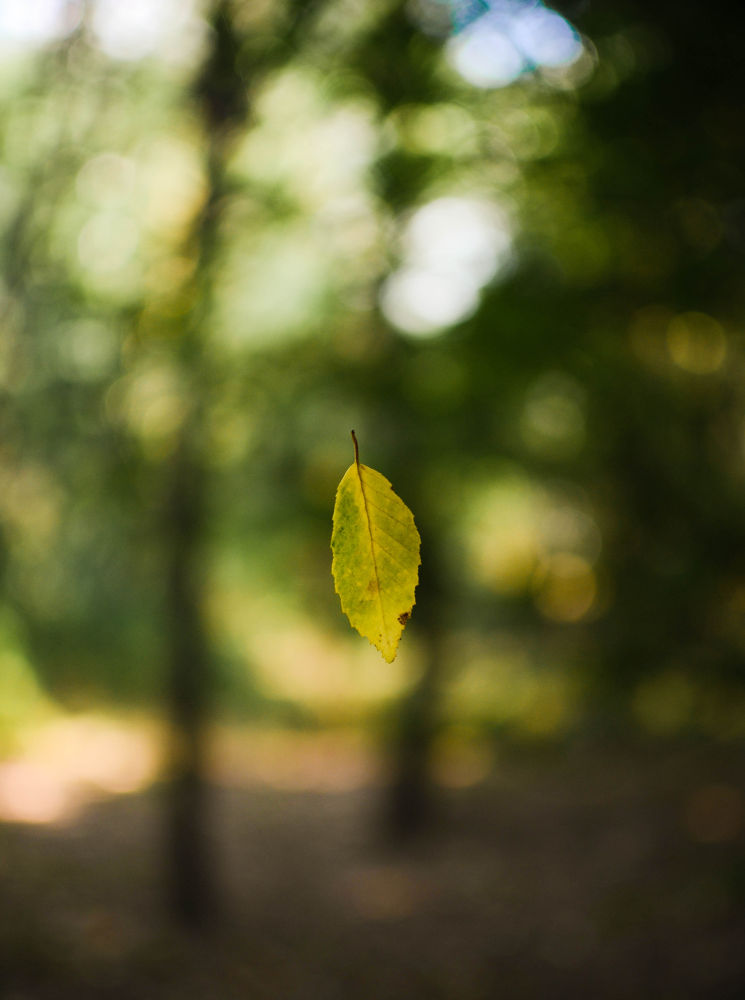 leaf by Dario D'isanto