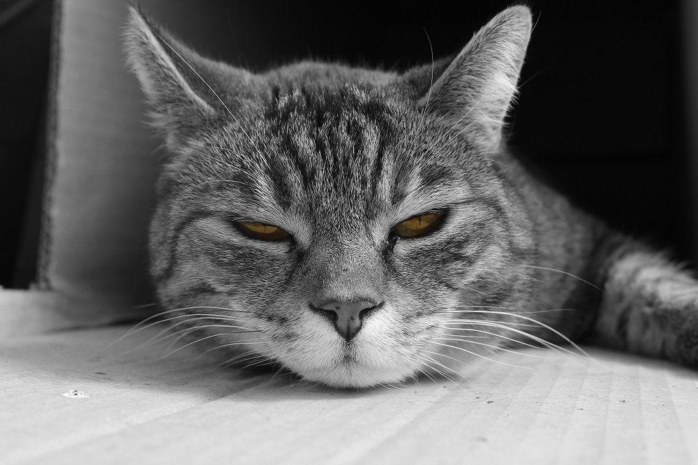 My Cat Kira  († 26.10.2013) by FotoSkyline