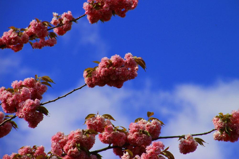 Blue Sky by peterkryzun
