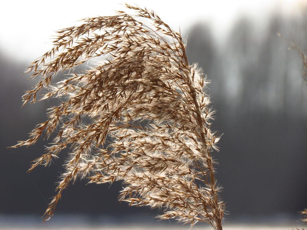 Wintertimes by peterkryzun