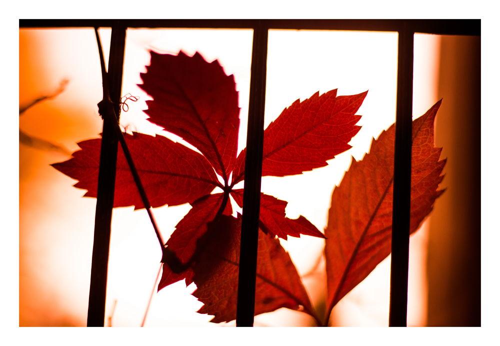 Herbst by peterkryzun