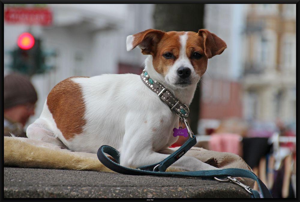 The Waiting Dog by peterkryzun