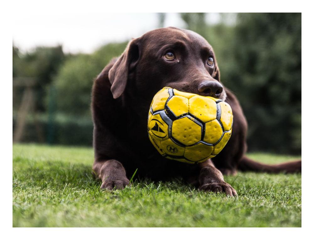 Goalkeeper by peterkryzun