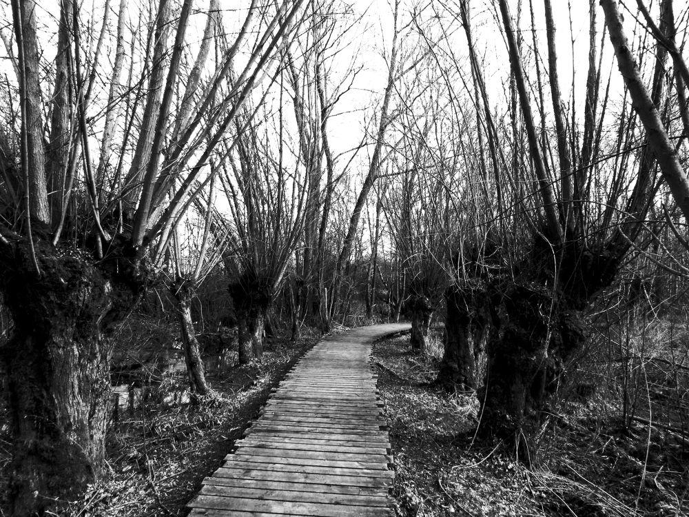 Marshland by peterkryzun