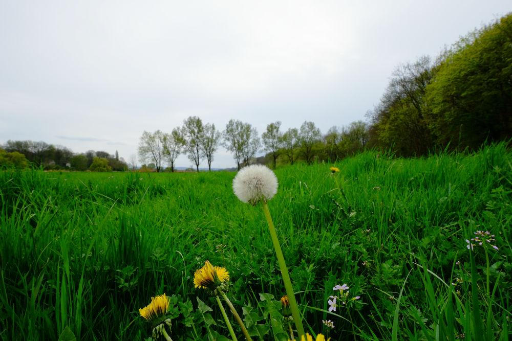 Green, Green Grass of home by peterkryzun