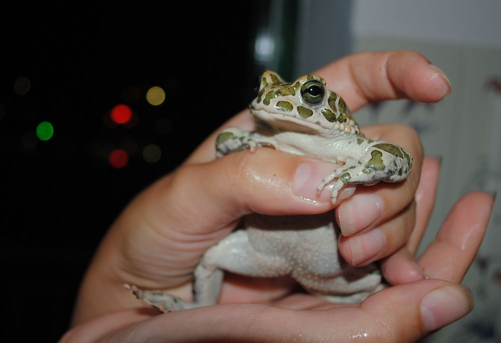 Friendly frog by titus