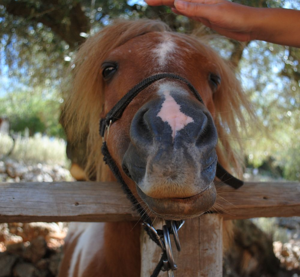 Friendly Poney by titus