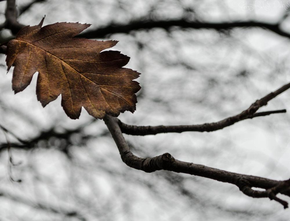 Photo in Random #winter #sky #leaf #tree #leaves #brown