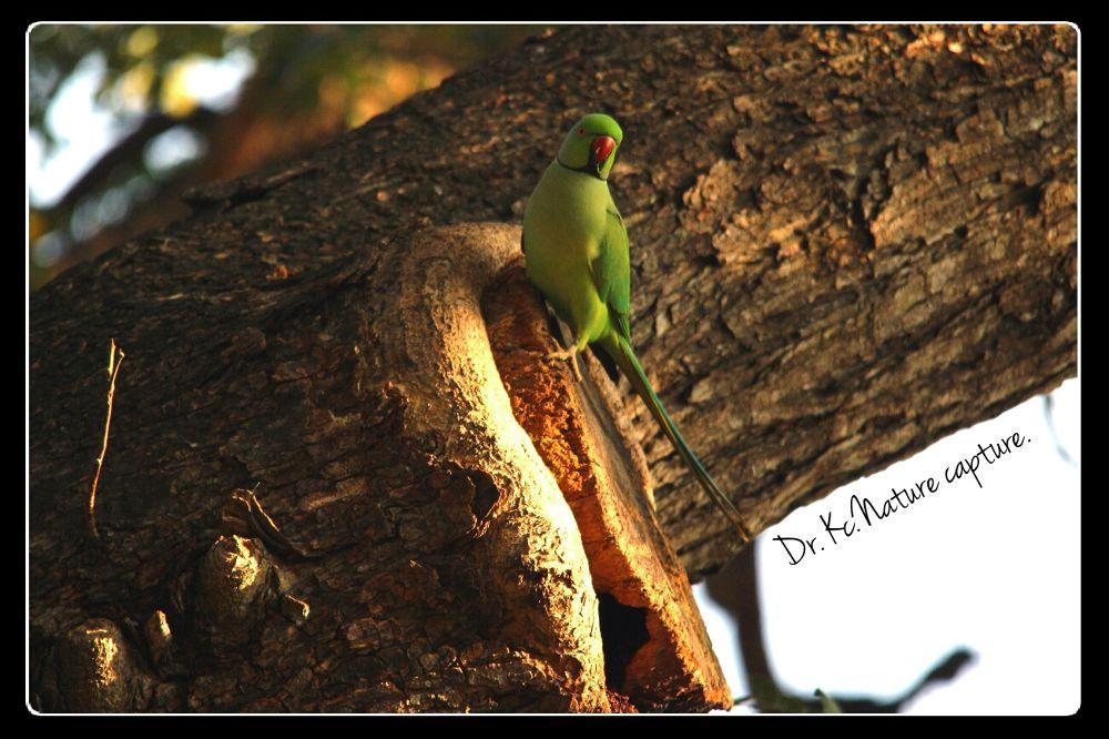 Parrot's paradise.  by kalyanchakravarthi94064