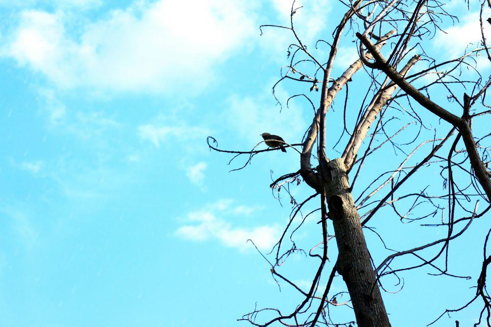 Touch the sky.  by kalyanchakravarthi94064