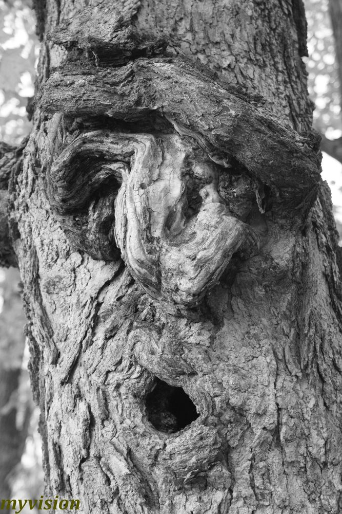 an ent.. by johnnyalford12