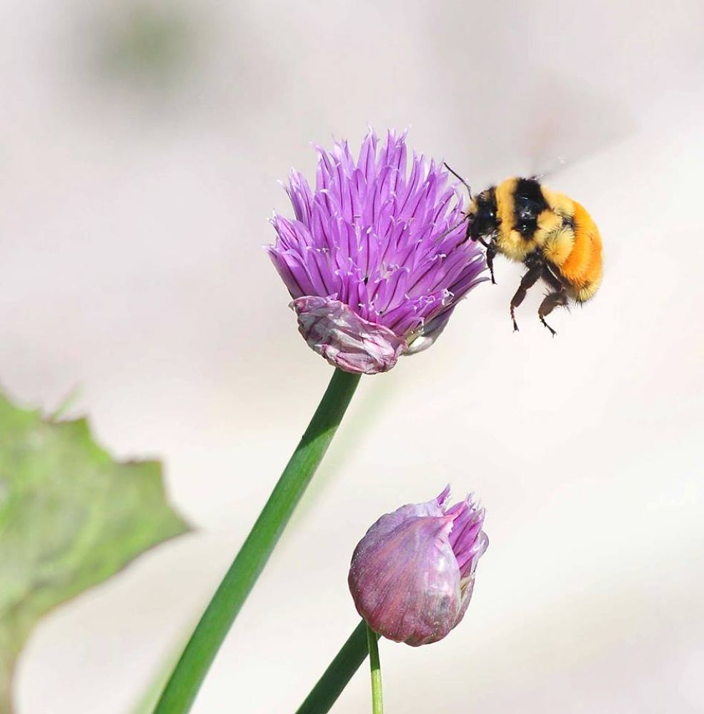 Bee all that you can Bee by TeePeeCoPhotos