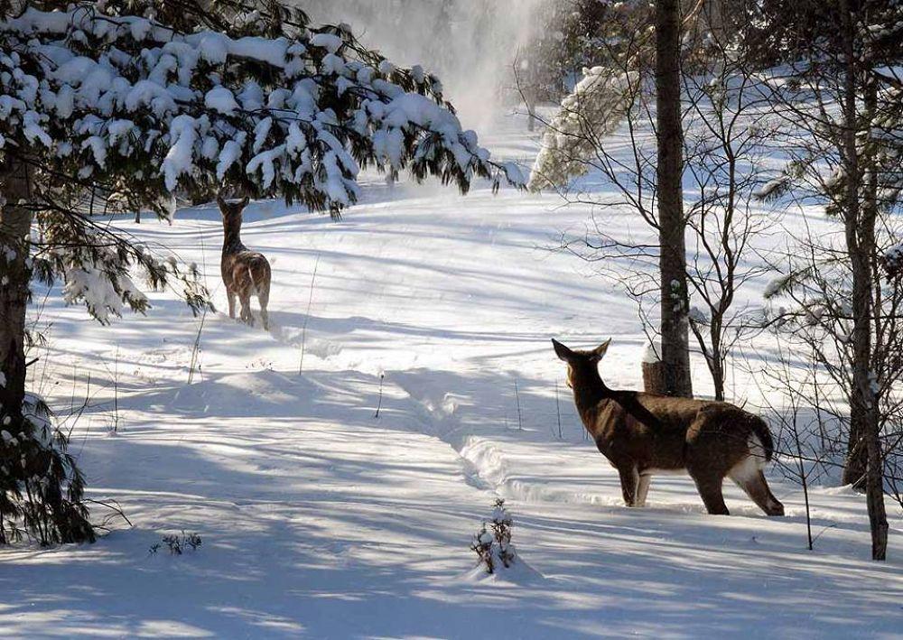 Deer in the backyard by TeePeeCoPhotos