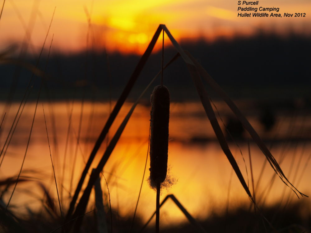 An evening in the Hullet Wildlife Area by Sean Purcell