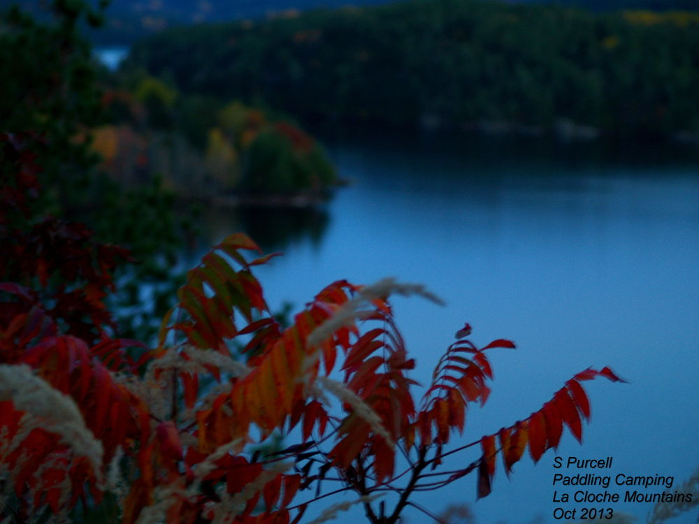 Twilights brush , La Cloche Mountains  by Sean Purcell